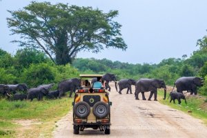 Game drive in Murchison Falls
