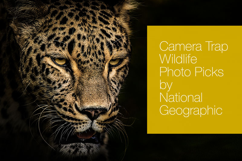 camera-trap-wildlife-photo-national-geographic