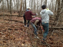 Clearing downed trees at the Tom Smyth overlook