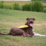 The Dog Days of Summer:  How Caitlyn Stole Mount Pleasant's (and the World's) Heart