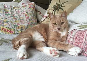 Annie the domestic cat, Bill Frodyma - East Cooper's Pets