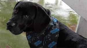 Otis the Creek Dog (lab/basset hound mix), Captain Tommy Edwards - East Cooper's Pets