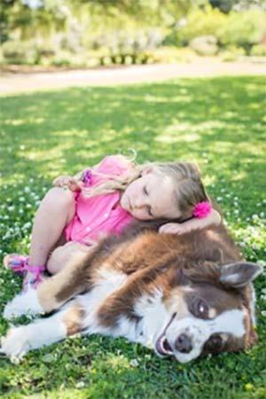 Pork Chop the Australian Shepherd, Cara Heule - East Cooper's Pets