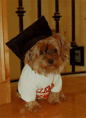 Tiny the Yorkshire Terrier, Jenny Atkinson - Mount Pleasant Pets