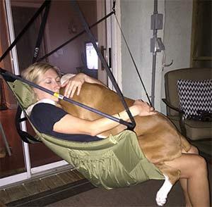 Titan the Boxer, Lindsay Gipe - Mount Pleasant's Pets