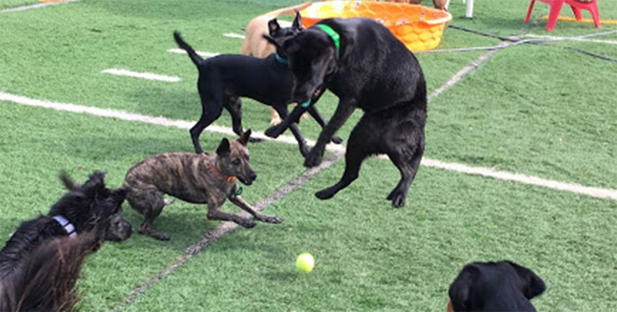"""Dogs getting some """"Playtime Paradise"""" at Pooch Palace"""