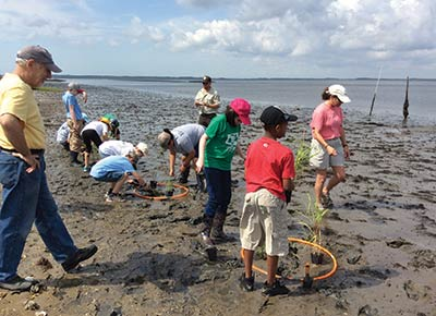 James B. Edwards students take part in a sporobolus grass transplant on Wadmalaw Island.