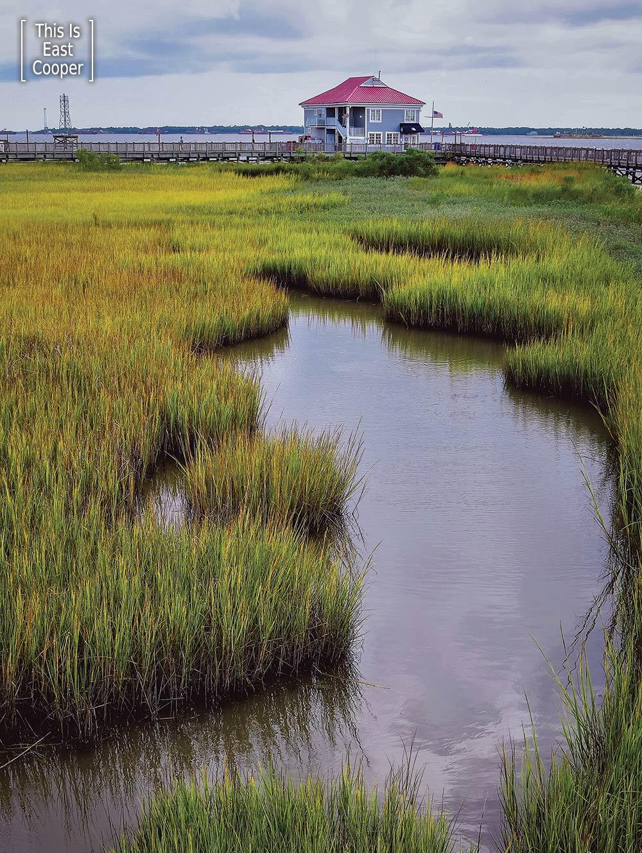 Glimmering Marsh, near Charleston Harbor Marina offices