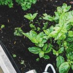 Unearthed: Starting a Vegetable Garden