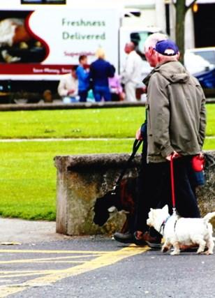 People Walking Dogs by Fiona Phelan