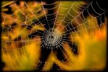 Autumn Web by Lori Strang