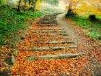Leafy Steps by Lori Strang