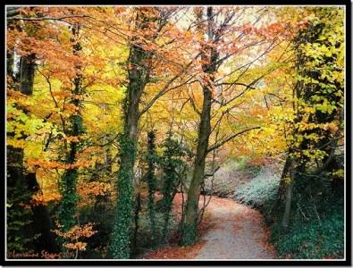 Twisted Path by Lori Strang