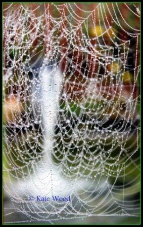 Diamond Web by Kate Wood
