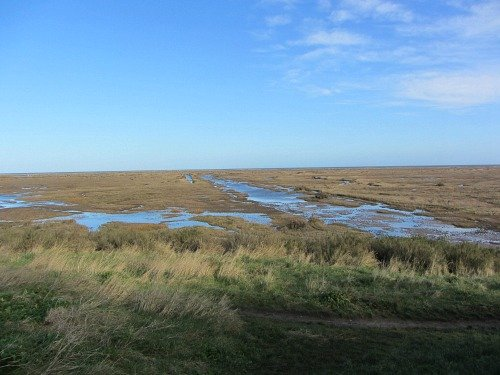 salt marsh stiffkey