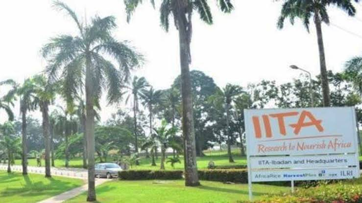 40,000 youths to benefit from IITA project
