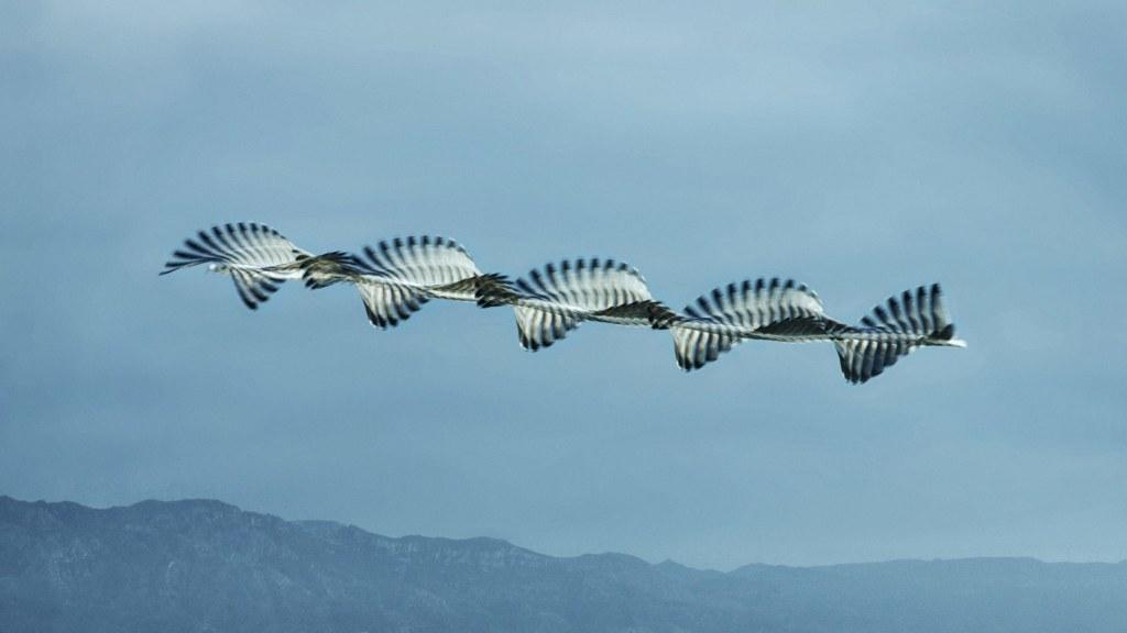 Xavi Bou - Ornithographies