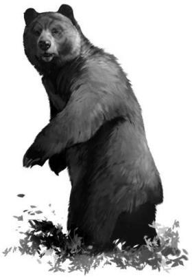 Bear_Interior