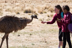 "A scene from Imogen Thomas' ""The Emu Runner"""