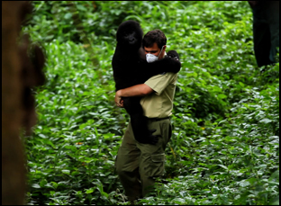"Emmanuel de Merode with a gorilla in ""Virunga"""