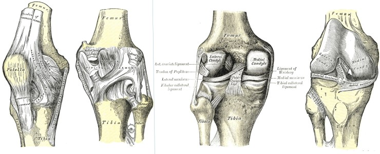 tendons-and-ligaments