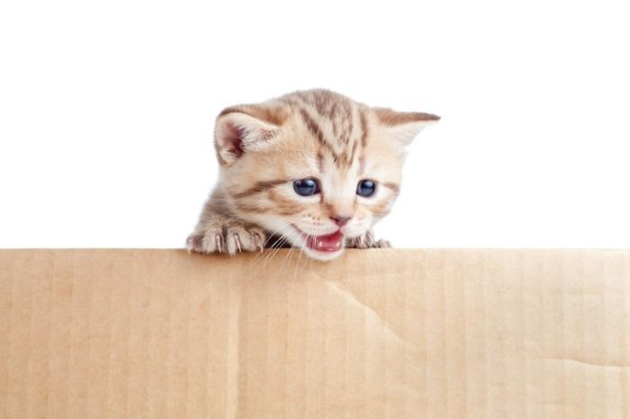 Katze in Umzugskarton
