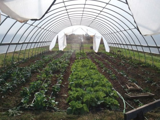 This hoop house at Our Harvest helps extend the local food-growing season.