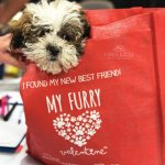 Furry Valentine pet adoption