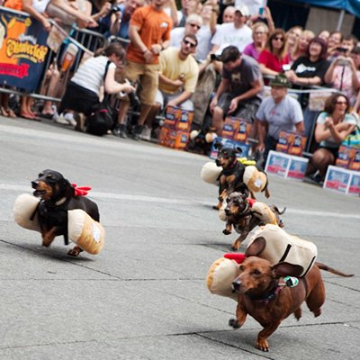 Annual Running of the Wieners at Oktoberfest Zinzinnati