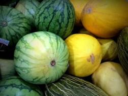 Melons Vivid