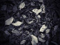 Leaves Abstract #3