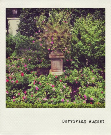 Surviving August