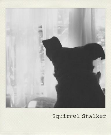 Squirrel Stalker