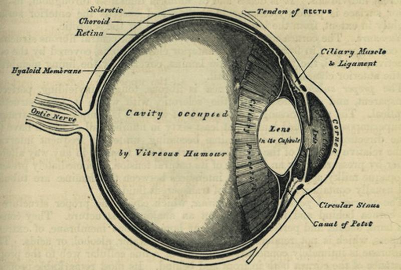 Eyeball from Grays Anatomy