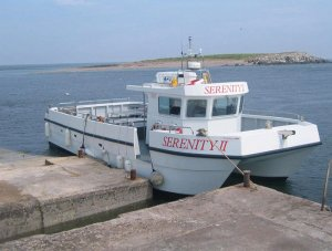 Farne Islands Tours