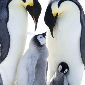 La Marcia Dei Pinguini Il Richiamo 2017 Film