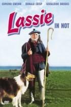 Lassie in Not (1949)
