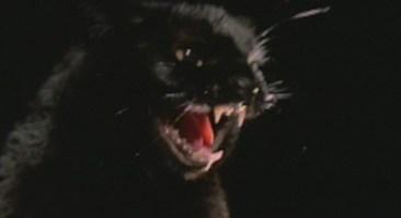 black-cat-lucio-fulci-1981