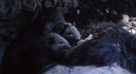 rats-eating-brains-in-The-City-of-the-Living-Dead-1980