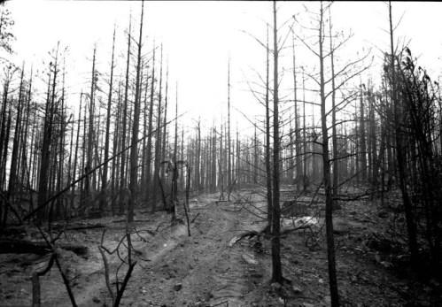 Slender_forest