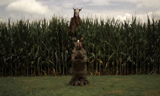 Rites-of-Spring-corn-field