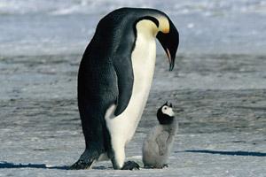 pinguine2.jpg