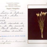 3 PROPOSTAS FOTOGRÁFICAS ÀS QUINTAS-FEIRAS: Luís Pavão, A Pedra, Artur Pastor
