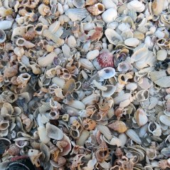 Lots of shells
