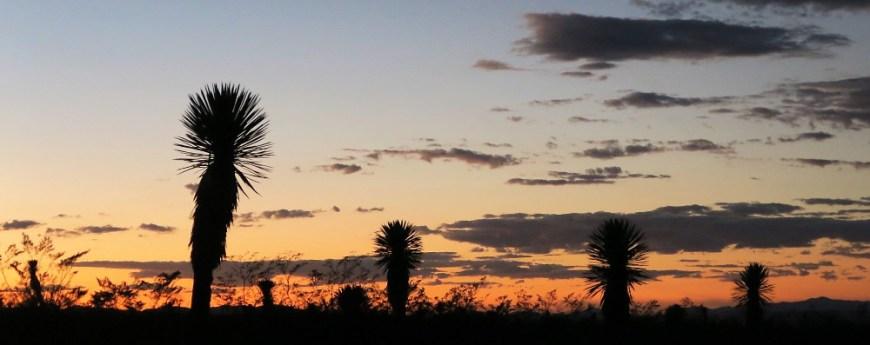 Kakteen Sonnenuntergang Realde14 - Real de Catorce - Ein magischer Ort in der Wüste Mexikos