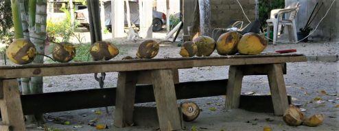 Frische Kokosnüsse gibt es auch jeden Tag