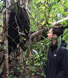 Ich inspiziere das riesige Termitennest im Ökopark Xanath in Papantla.