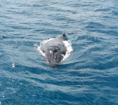 human-watching-humpback-whale-style.jpg