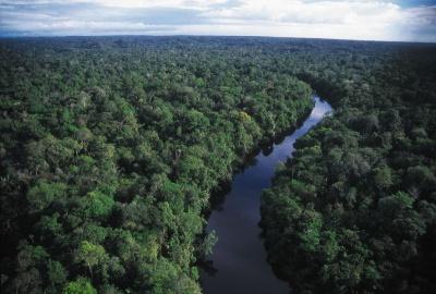 Amazon: The last frontier?