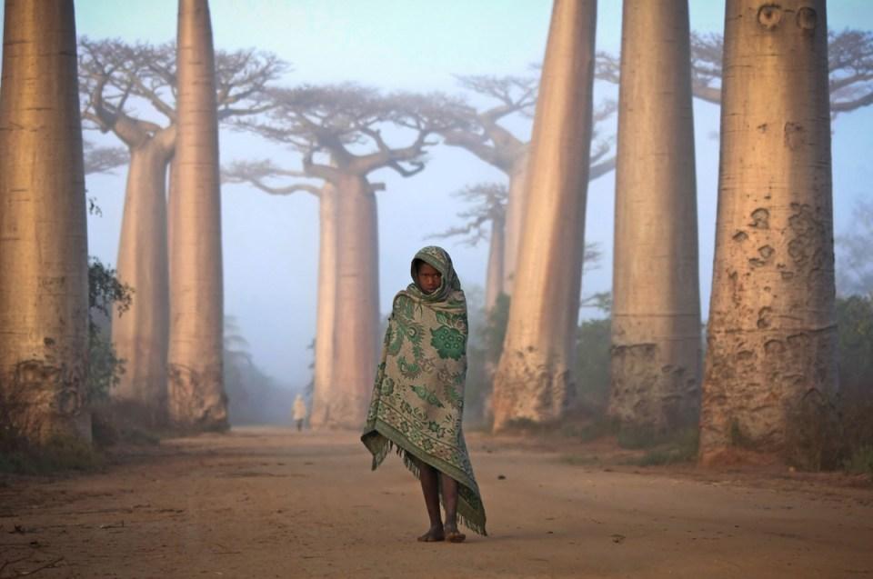 Une fillette malgache au milieu des Boababs.